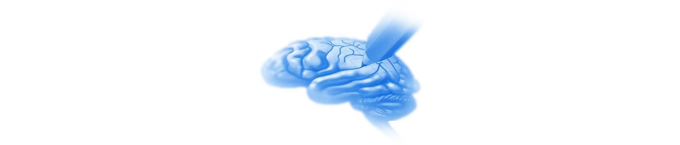 Programas de Entrenamiento REN Cerebro Activo