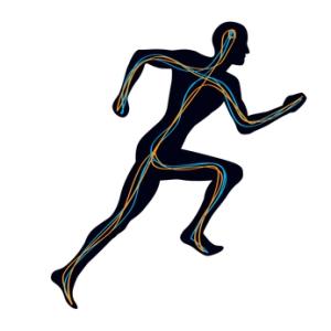 Sistema nervioso humano hombre corriendo