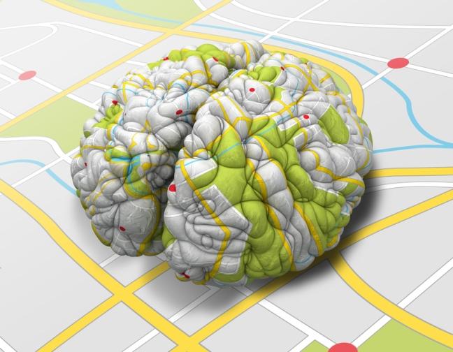 Representación de los mapas cerebrales