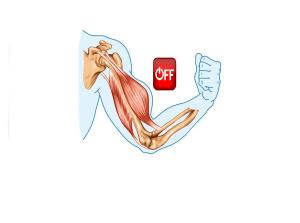 Los músculos flexores del codo de Rosi, entre otros el bíceps braquial se encontraban