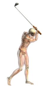 El sistema neuromuscular aumenta o reduce la tensión de los músculos que necesita .