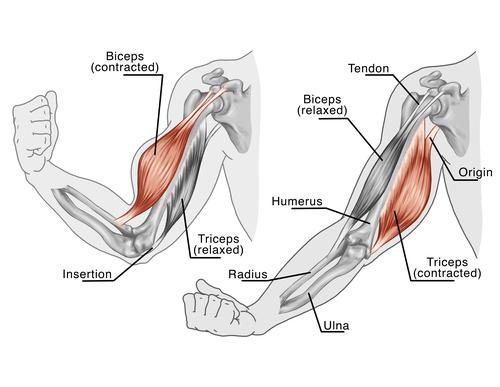 Tipos de estiramientos musculares: Una cuestión de enfoque – REN ...