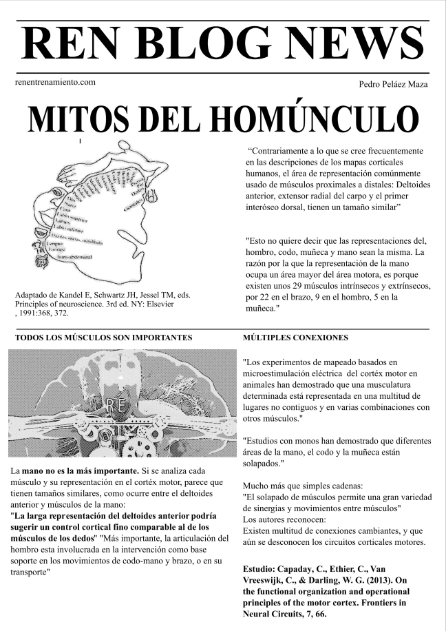 Mitos del homúnculo ren entrenamiento