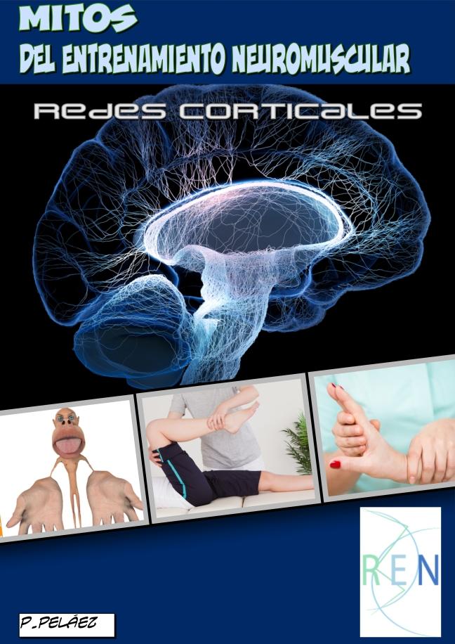 MITOS DEL ENTRENAMIENTO NEUROMUSCULAR: REDES CORTICALES