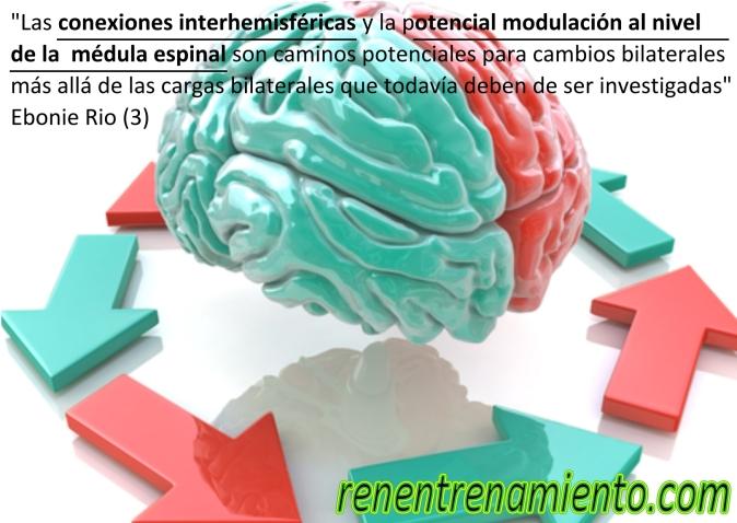 conexiones interhemisfericas