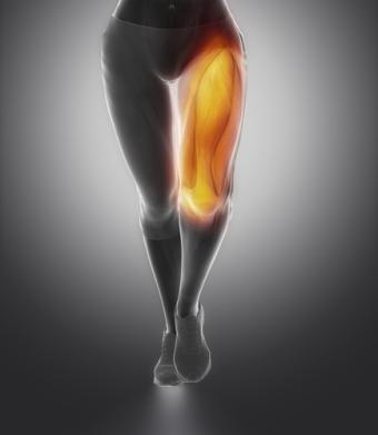Quadriceps female anatomy